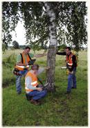 ITEG tree safety test experts